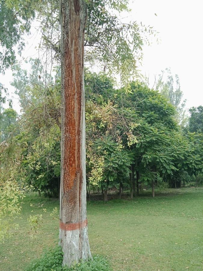 De achtergrond van de boomtextuur met onderbrekingen, geweven behang als achtergrond royalty-vrije stock fotografie