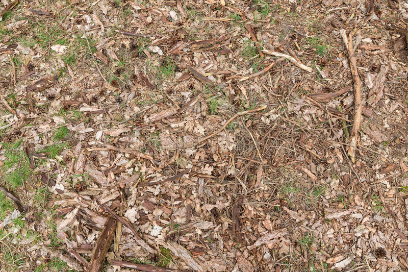 De achtergrond van bosvloer met houten spaanders, twijgen, doorbladert, gras en denneappels royalty-vrije stock foto's