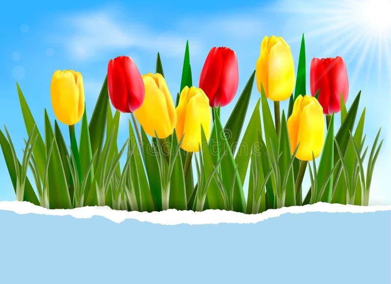 De achtergrond van de aard met de lentebloemen vector illustratie