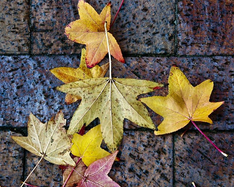 De Achtergrond van de Bladeren van de herfst stock foto