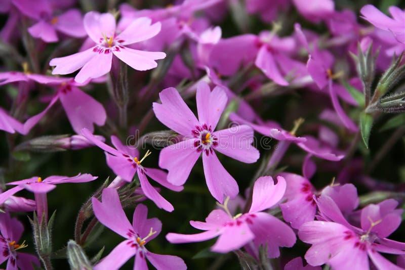 De achtergrond van de bloem - sluit omhoog stock afbeelding