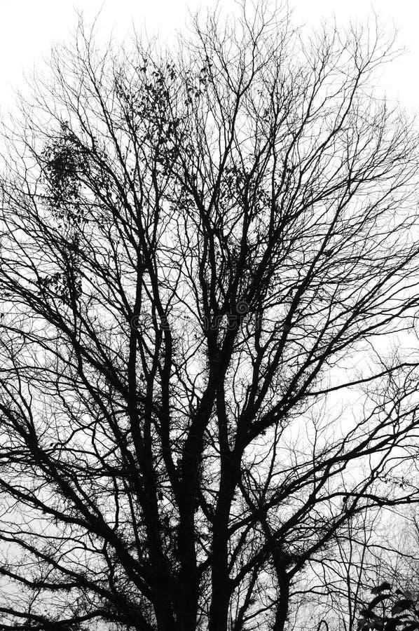 De achtergrond van de boom royalty-vrije stock foto