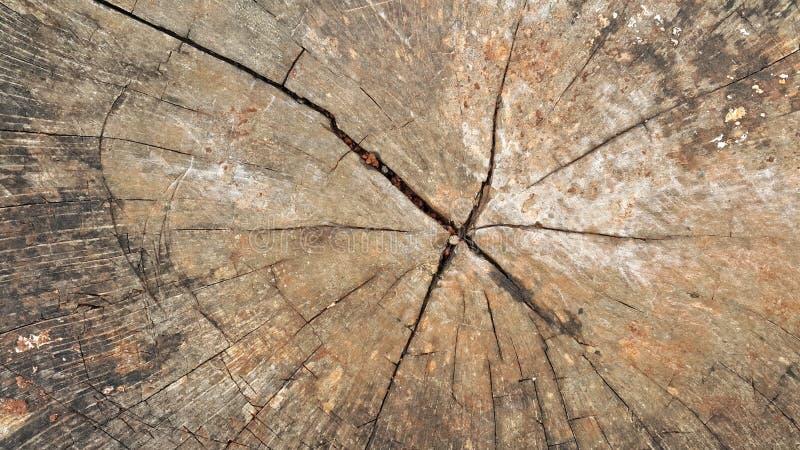 De Achtergrond van de boomboomstam royalty-vrije stock afbeelding