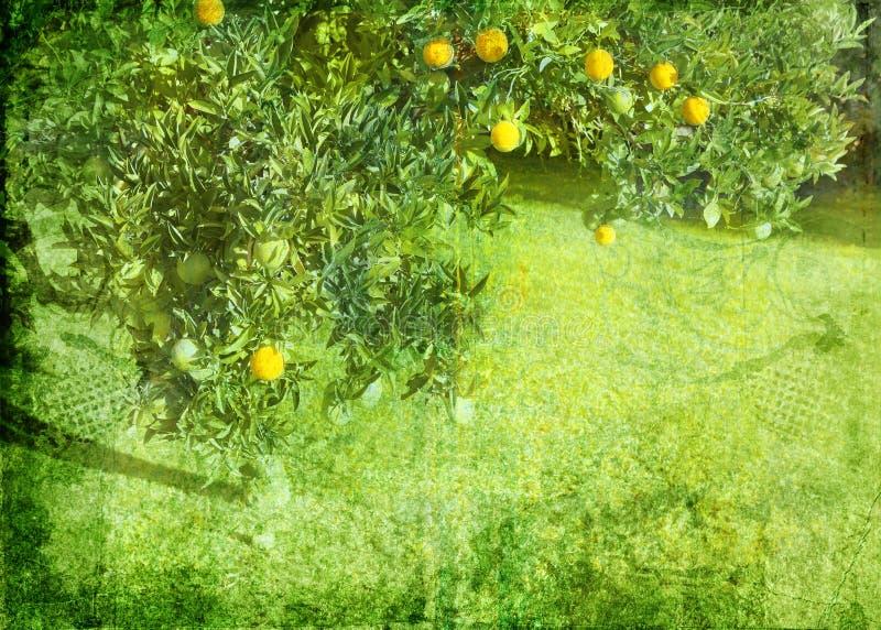 De achtergrond van de de citroenboom van Grunge stock afbeelding