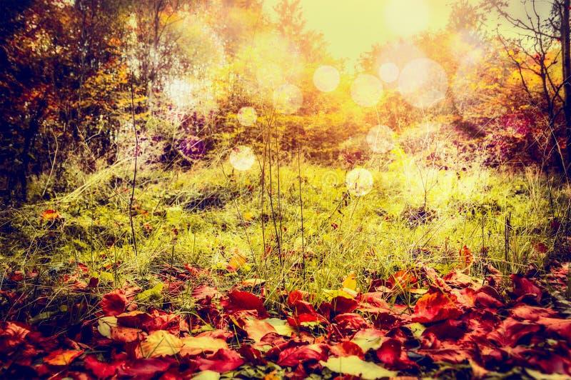 De achtergrond van de de herfstaard met rode gevallen bladeren, wilde gras en bomenstruik met zonlicht en bokeh royalty-vrije stock fotografie