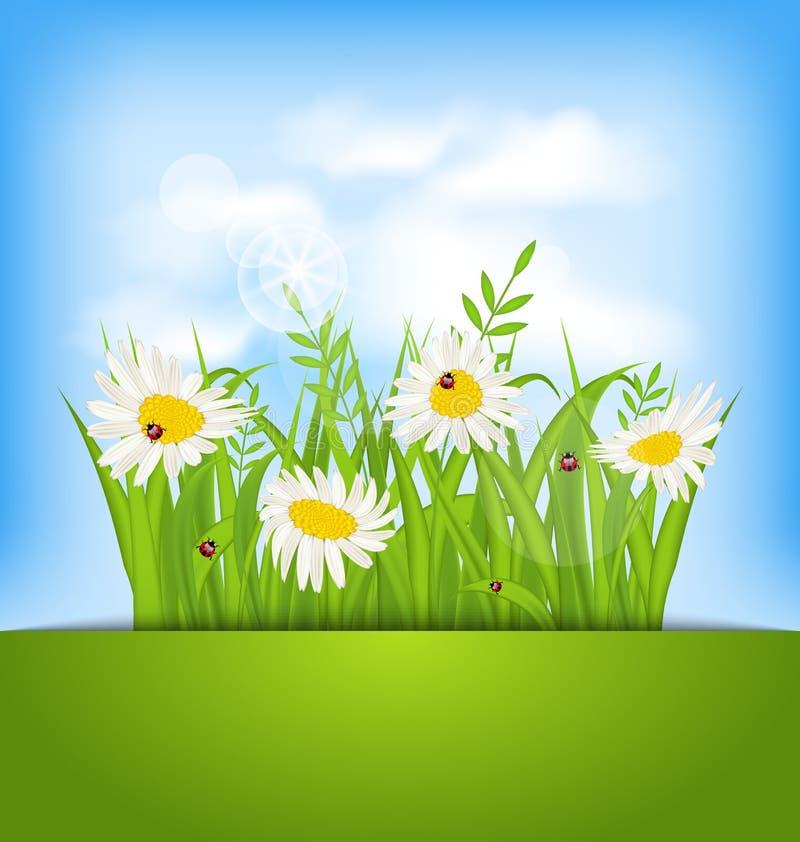 De achtergrond van de de lenteaard met camomiles, lieveheersbeestjes, gras, blauw s stock illustratie