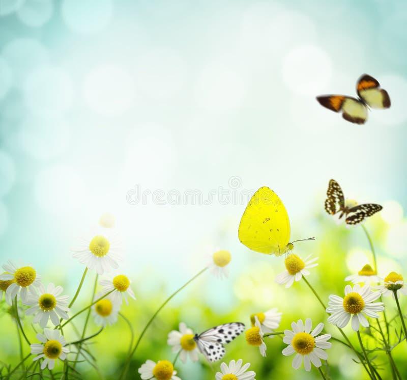 De achtergrond van de de lentebloem royalty-vrije stock afbeelding