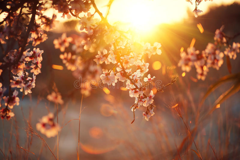 De achtergrond van de de lentebloesem Mooie aardscène met bloeiende boom en zongloed royalty-vrije stock foto