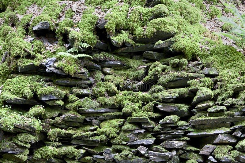 De achtergrond van de de rotsmuur van het mos stock afbeeldingen