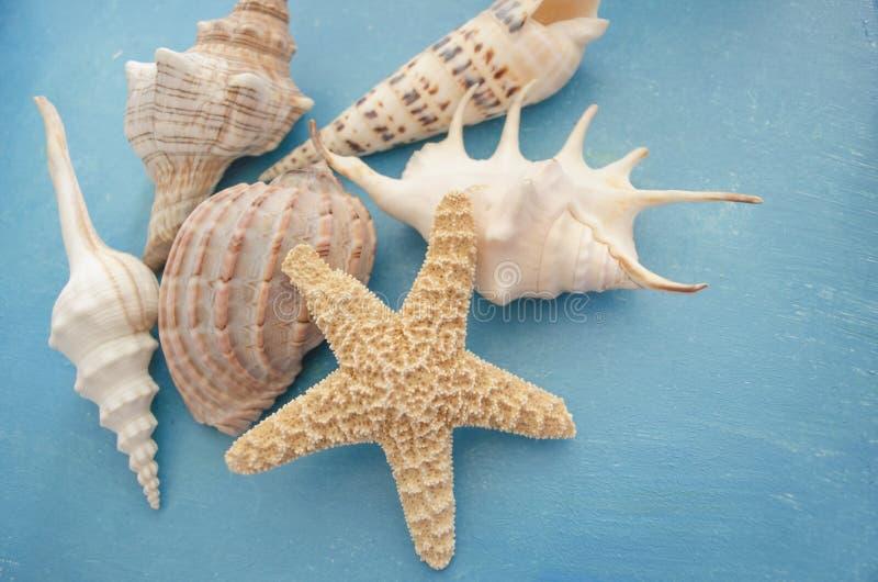 De achtergrond van de de vakantiesamenstelling van de de zomerinspiratie met strandzeester en shells op blauw houten lijstclose-u royalty-vrije stock fotografie