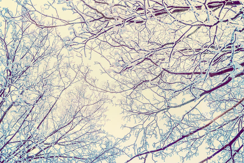 De achtergrond van de de winteraard met hoar vorst behandelde boomtakken royalty-vrije stock afbeelding