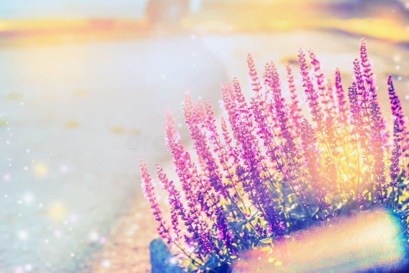 De achtergrond van de de zomeraard met het wijze openlucht bloeien, royalty-vrije stock foto
