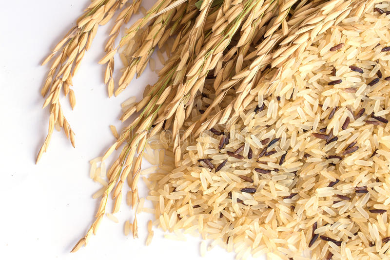 De Achtergrond van de Gabarijst, Ontkiemde ongepelde rijst, geneeskrachtige propertie stock foto's