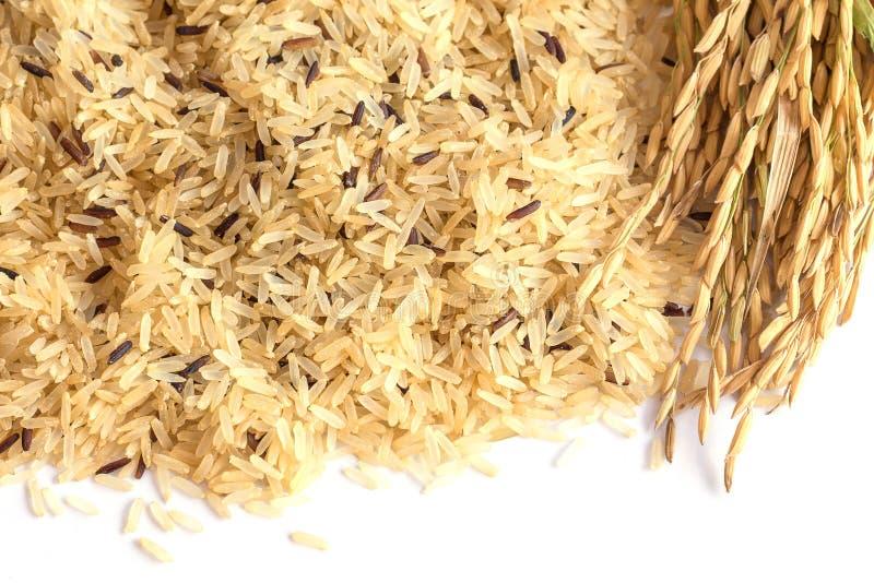 De Achtergrond van de Gabarijst, Ontkiemde ongepelde rijst, geneeskrachtige propertie stock afbeeldingen
