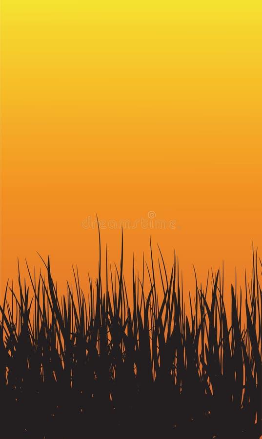 De Achtergrond van de graszonsondergang stock afbeelding