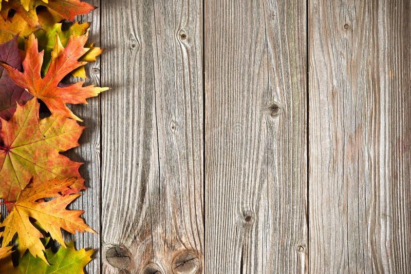 De achtergrond van de herfst met gekleurde bladeren stock foto's