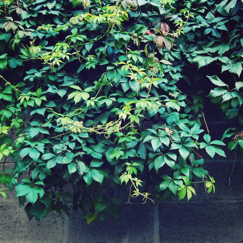 De achtergrond van de herfstbladeren - uitstekend effect stock afbeeldingen