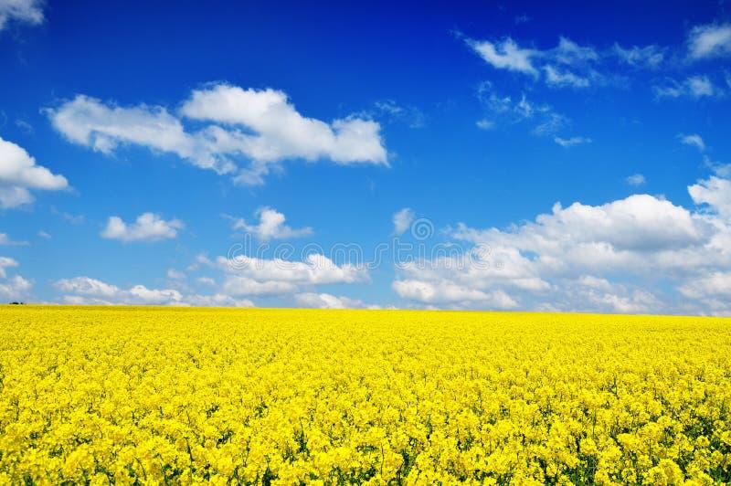 De achtergrond van de het gebiedsaard van Canola stock foto's
