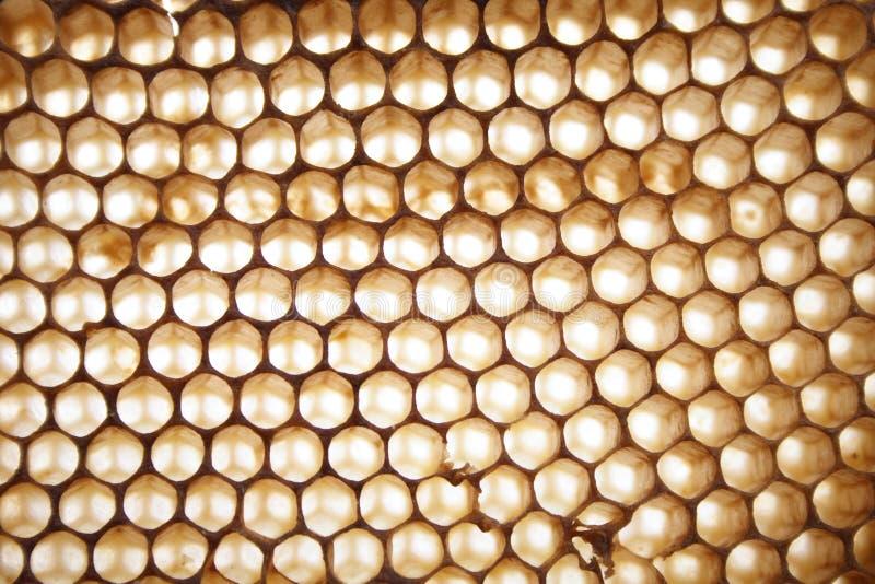 De achtergrond van de honing stock foto