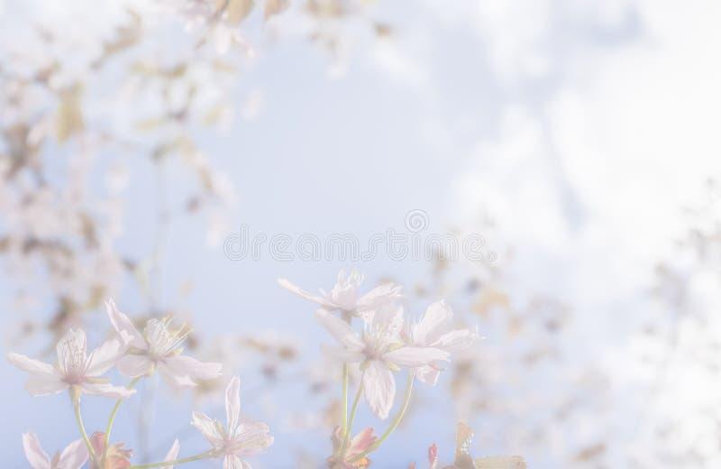 De achtergrond van de kersenboom stock foto
