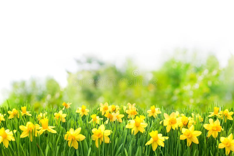 De achtergrond van de lentepasen royalty-vrije stock afbeelding