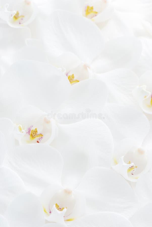 De achtergrond van de orchidee stock foto's