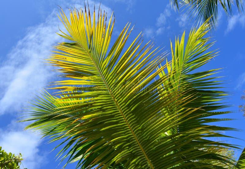 De achtergrond van de palmtak stock afbeeldingen