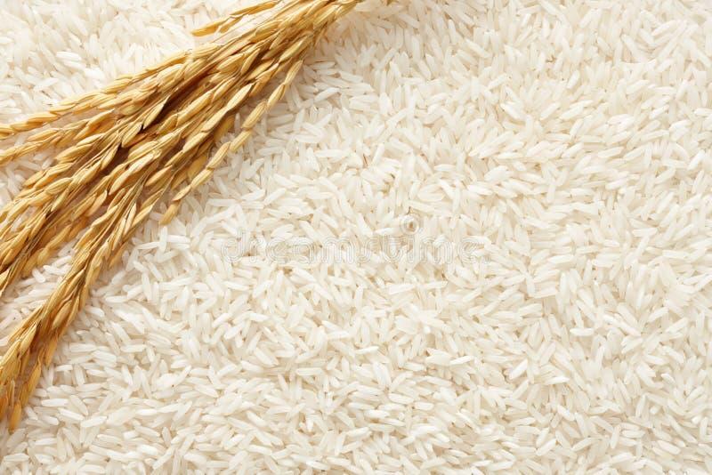 De achtergrond van de rijst royalty-vrije stock afbeeldingen