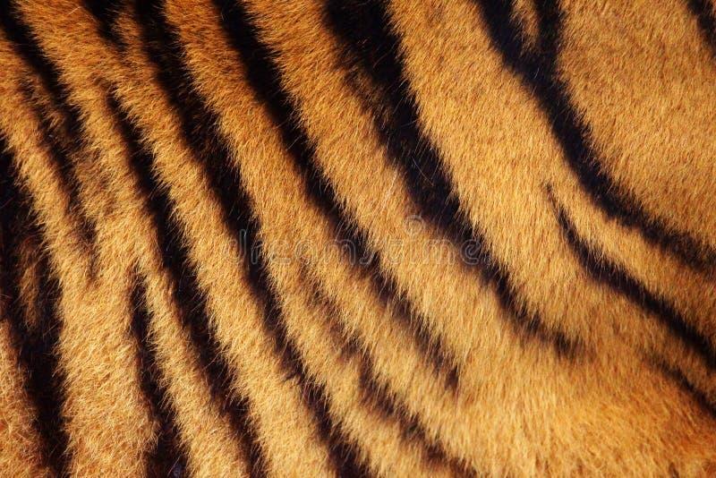 De achtergrond van de tijgerstreep royalty-vrije stock afbeelding