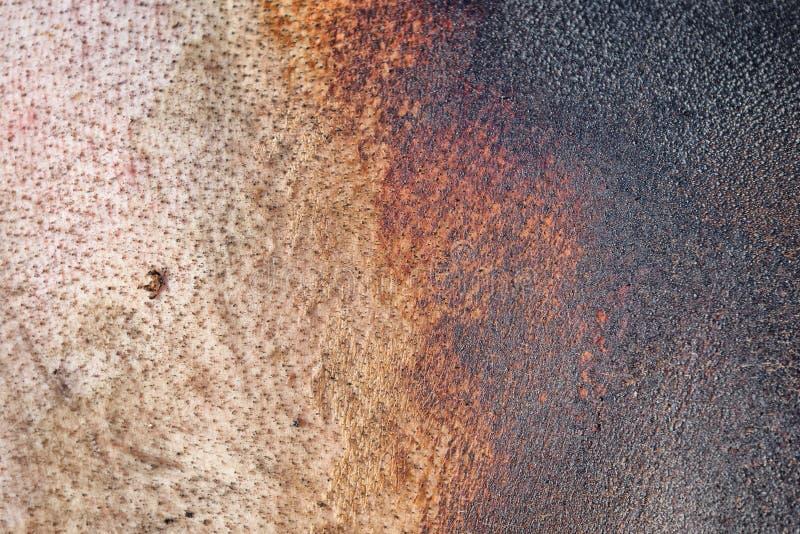 De achtergrond van de varkenshuid, textuur van huid stock afbeelding