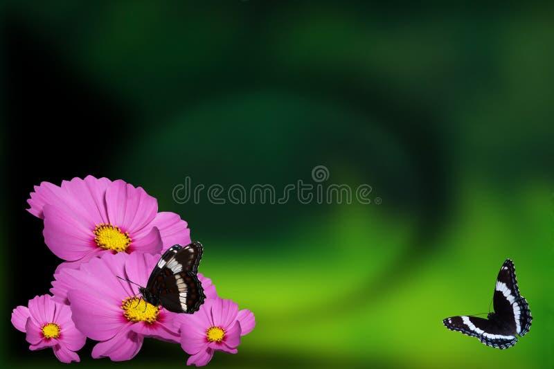 De Achtergrond van de vlinder royalty-vrije stock foto's