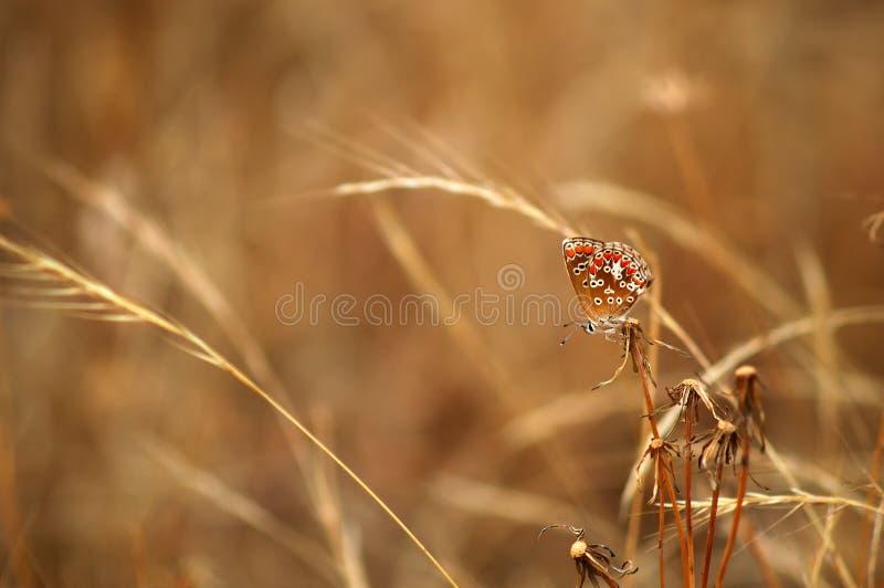 De achtergrond van de vlinder stock foto's