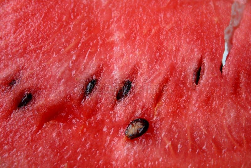 De achtergrond van de watermeloen
