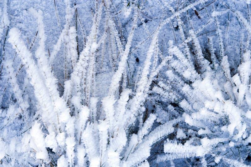 De achtergrond van de winter met natuurlijk rijp en ijs stock afbeeldingen