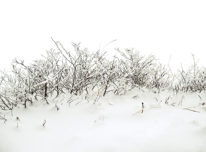 De achtergrond van de winter met sneeuwstruik stock afbeeldingen