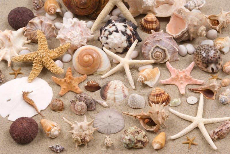 De Achtergrond van de zeeschelp stock foto's