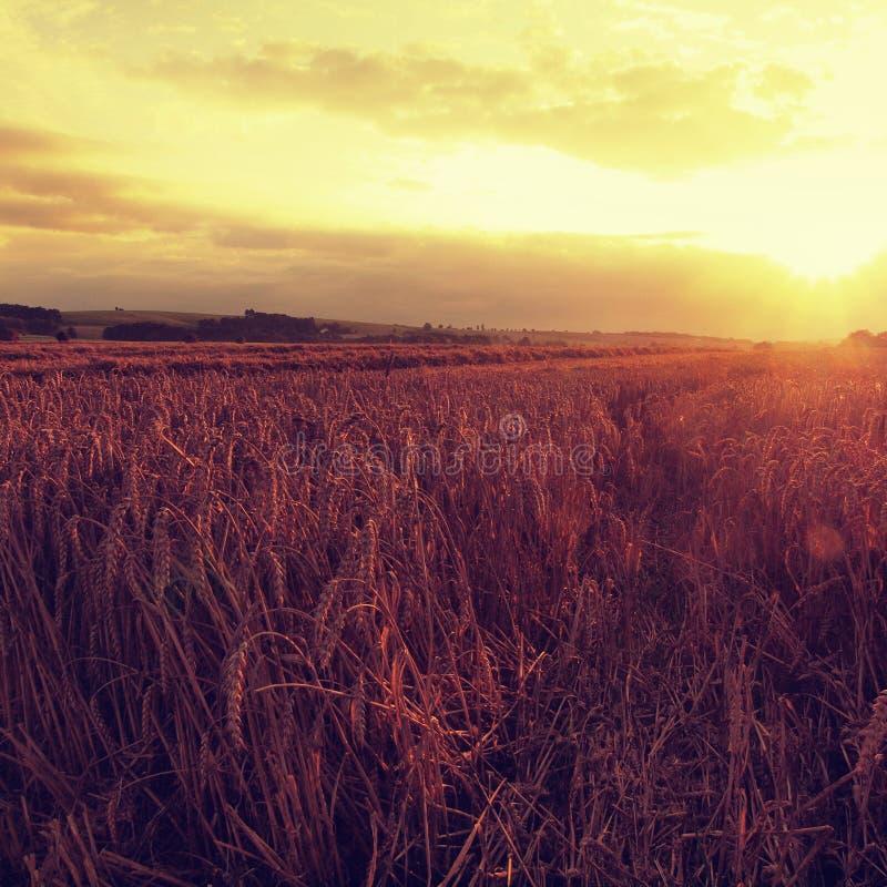 De achtergrond van de zonsondergang bewolkte oranje hemel Het plaatsen van zonstralen op horizon in landelijke weide stock foto's
