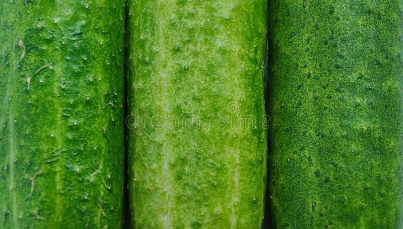 de achtergrond van de drie komkommertextuur Rijpe groene komkommers met p royalty-vrije stock foto