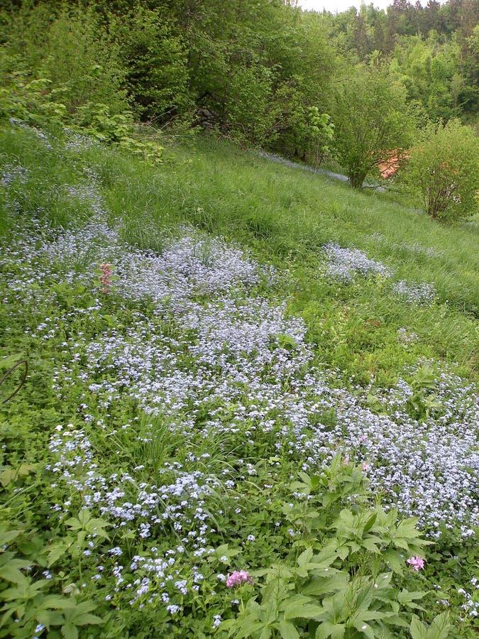 De achtergrond van een groene weide met mooie violette bloemen, bomen groeit, onbeschadigde aard stock afbeeldingen