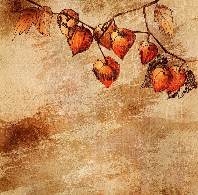 De achtergrond van Grunge met een schets van oranje physalis royalty-vrije illustratie