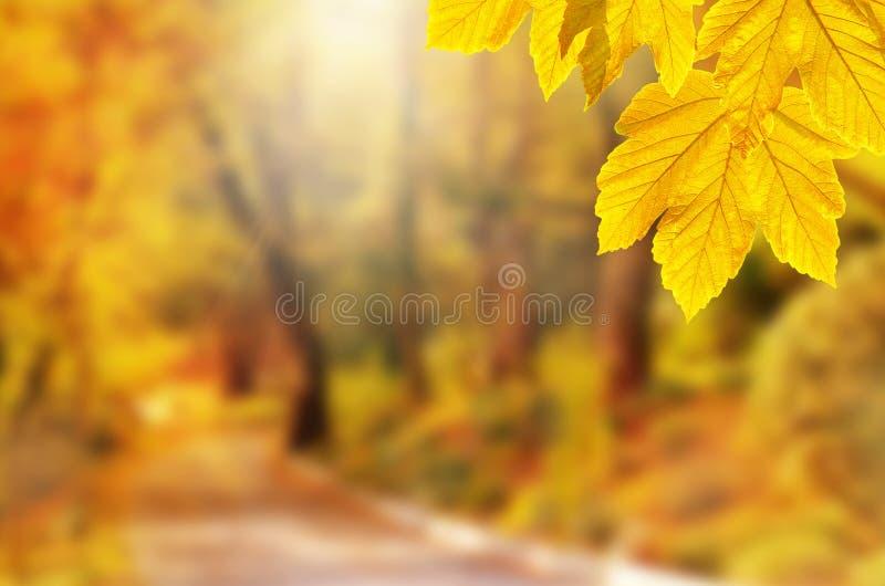 De achtergrond van de herfst Rode en oranje het bladclose-up van de kleurenKlimop Geel blad in de herfstpark op een vage achtergr royalty-vrije stock foto's