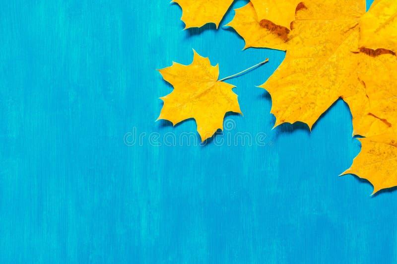 De achtergrond van de herfst Rode en oranje het bladclose-up van de kleurenKlimop De seizoengebonden bladeren van de de herfstesd royalty-vrije stock fotografie
