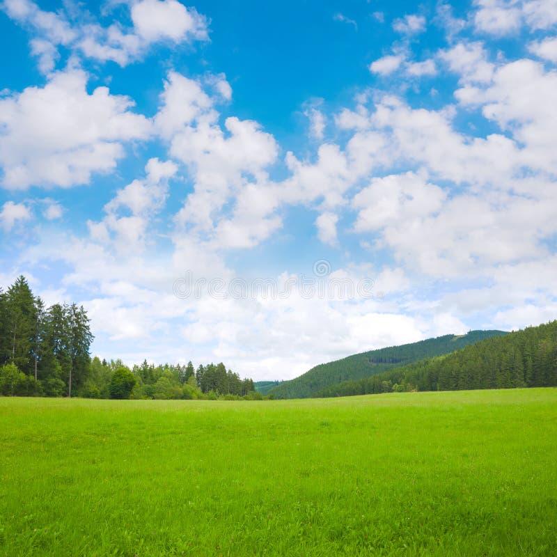 De achtergrond van het aardlandschap met gras, weide en blauwe hemel stock afbeelding