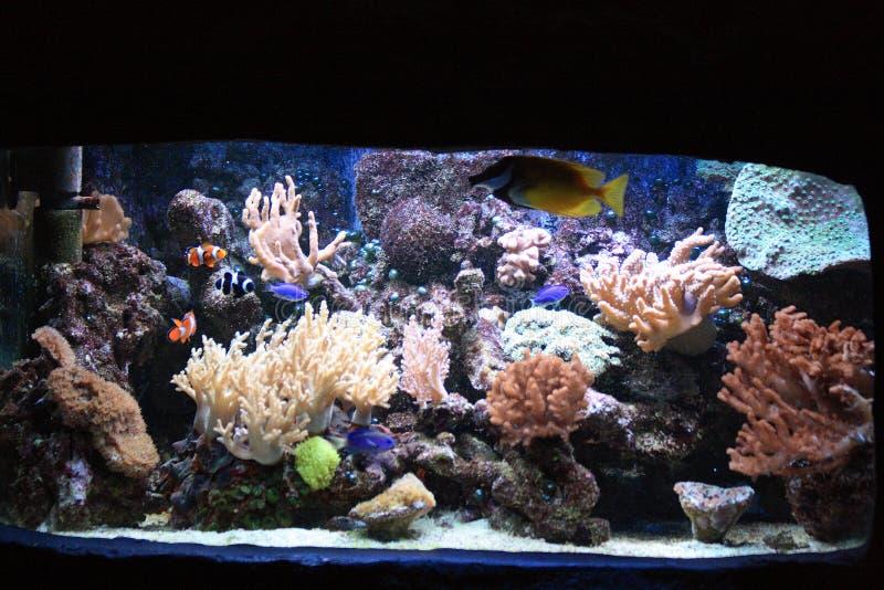 Download De Achtergrond Van Het Aquarium Stock Foto - Afbeelding bestaande uit park, genaturaliseerd: 10779806