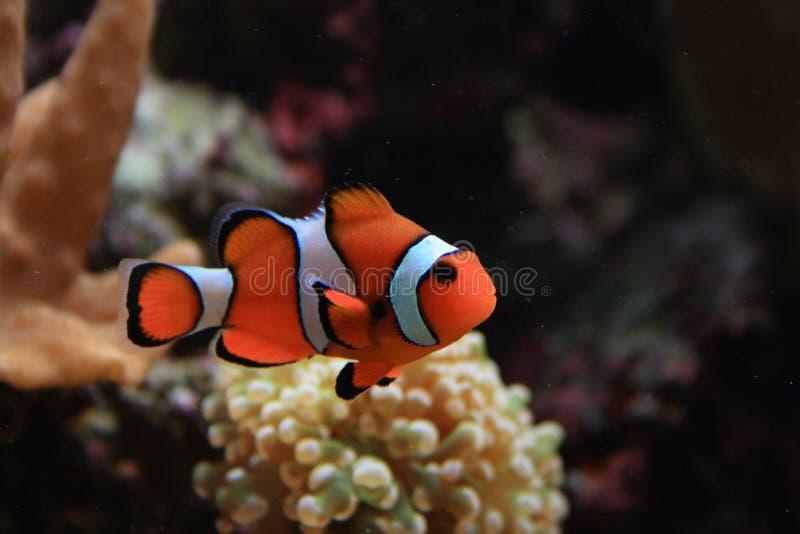 Download De Achtergrond Van Het Aquarium Stock Afbeelding - Afbeelding bestaande uit overzees, uitrusting: 10779893