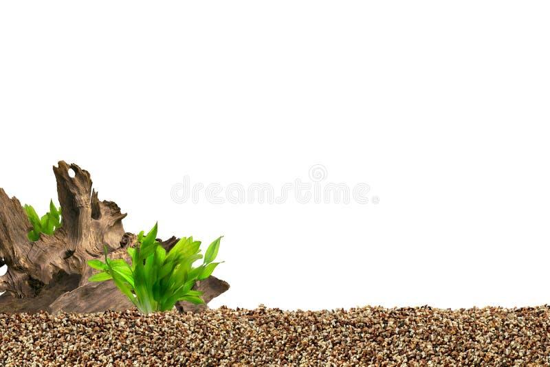 De achtergrond van het aquarium stock fotografie