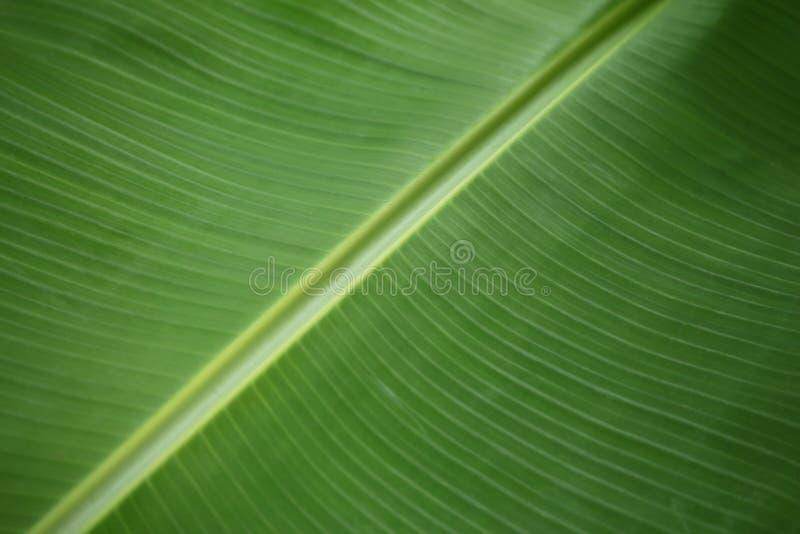 De achtergrond van het banaanblad stock foto's