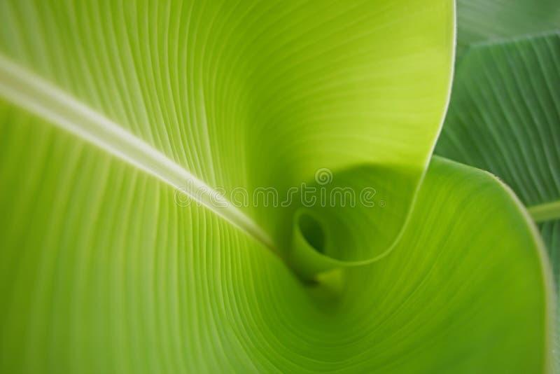 De achtergrond van het banaanblad in aard royalty-vrije stock afbeeldingen