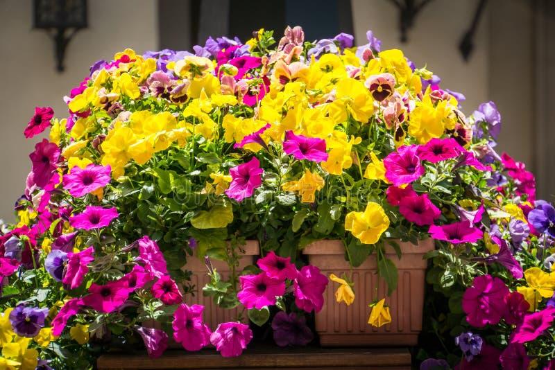 De Achtergrond van het bloemengebied royalty-vrije stock afbeelding