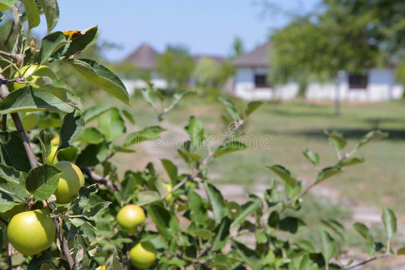 De achtergrond van het de boomhuis van de tuinappel stock afbeeldingen